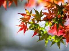 лист, осень, branch