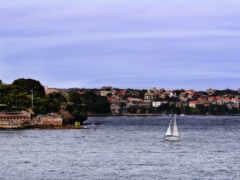 sailboat, race, sail
