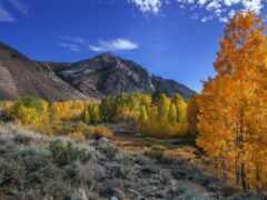 природа, дерево, гора
