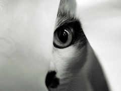 глаз, кот, взгляд