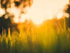трава, зелёный, свет