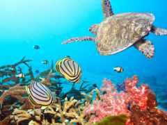 world, underwater, water