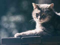 кот, кошки, canvas