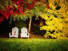 осень, backyard, fond