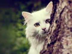 кошки, экран, белый
