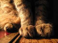 кошка, kot, soft