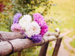 сумки, цветы, макро
