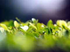 зелёный, макро, листва