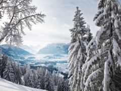 заснеженный, лес, winter