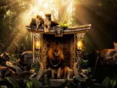 jungle, lion, left