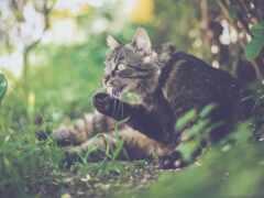 кот, лапа, устройство