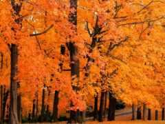 листва, осень, листьев