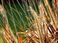 трава, большой, plan