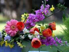 güzel, resimler, çiçek