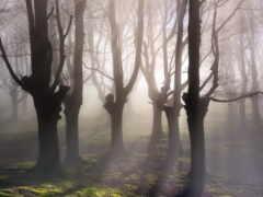 landscape, обнаженная, дерево