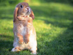 кролик, bunny, myself