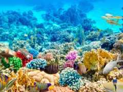 риф, египетский, фотообои