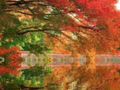 lovely, осень