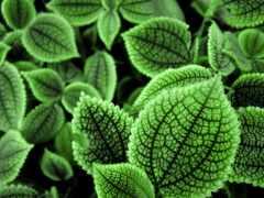 листва, зеленые, зелёный