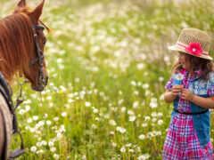 поле, лошадь