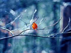 winter, природа, листочек