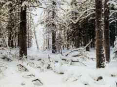 шишкин, winter, шишкина