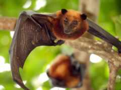 день, bat, bats