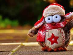 сова, шарф, winter