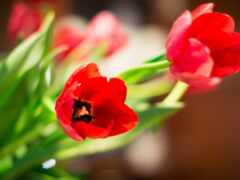 цветы, event, качество