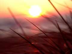 sun, природа, makryi