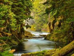 oregon, природа, река