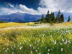 альпийские, луга, коллекция