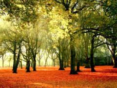 pemandangan, gambar, hutan