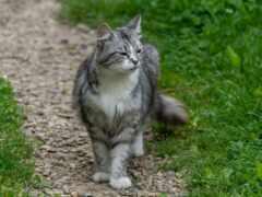кот, stand, бежать