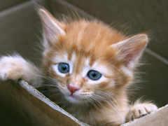 котенок, месяца, котята