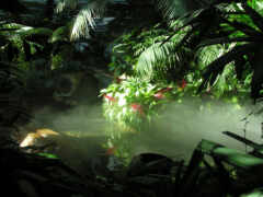 jungle, fore, fond