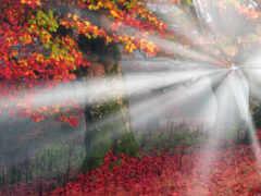 осень, red, sun