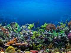 coral, объекты, copyright