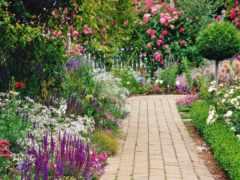 garden, красивый, цветами