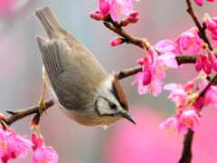 природы, awakening, весна