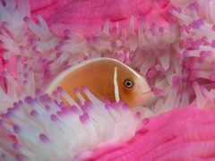 fish, море, coral