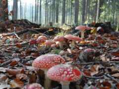 mushroom, fore, лес