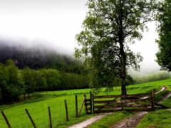 doğa, duvar, manzara