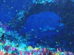 fish, coral, underwater
