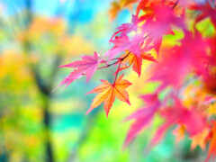 лист, осень, фон