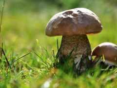 грибы, leg, mushroom