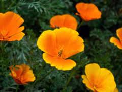 цветы, садовые, нужно