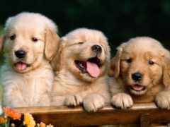 щенки, zhivotnye, щенка