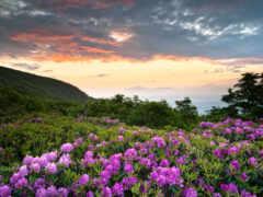 весна, цветы, funart