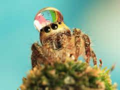 паук, пауки, пауков